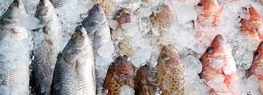 frozen-seafood