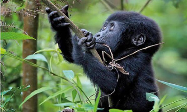 5-days-gorilla-wildlife-safari